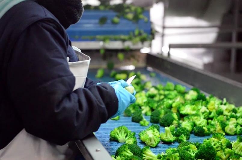 verdura ultracongelada